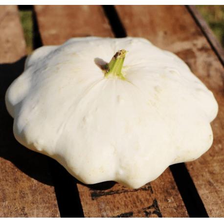 Pâtisson ….. ce légume improbable…. velouté, noix et jambon fumé (facultatif)