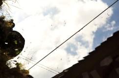 Peep the spiders