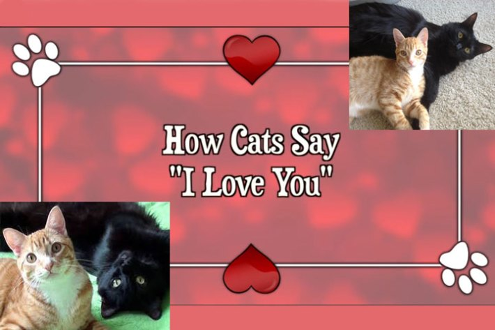 """How Cats Say """"I Love You"""""""