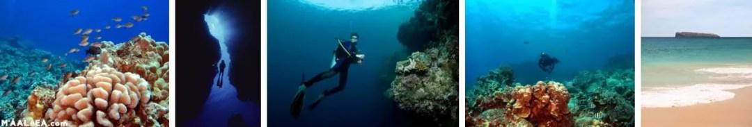 snorkel and scuba in Maui