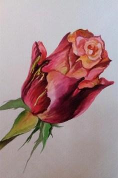 Aafrika roos 3