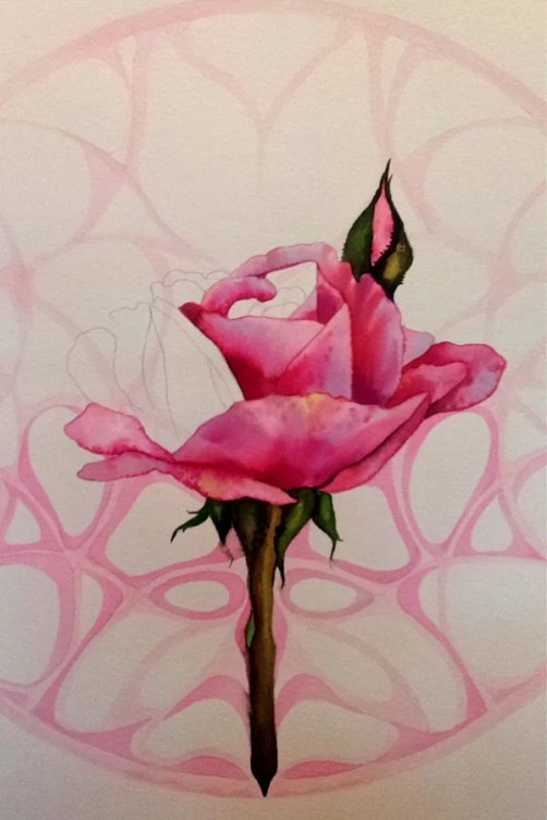 Rose Roos 3