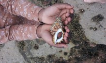 hand-shell