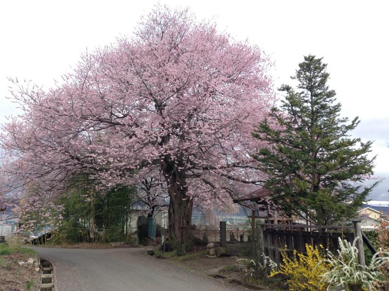 須坂市野辺の廣正寺