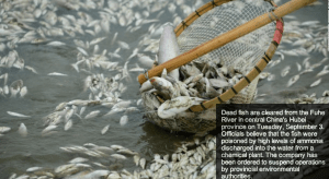http://edition.cnn.com/2013/09/05/world/asia/china-river-dead-fish/index.html?hpt=wo_c2