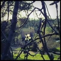 וכך המנזר נראה מכיוון רחביה, עם פריחת שקד