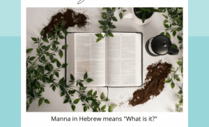 What is Manna? Can you recognize it when you see it?