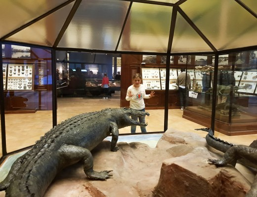 Notre visite au Africa Museum de Tervuren