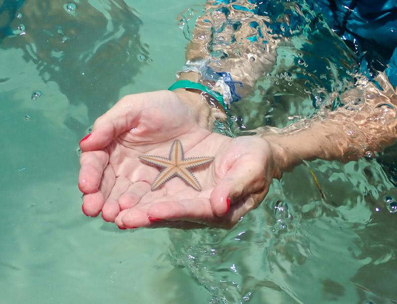 Réserve naturelle de Sian Kaan : étoile de mer, image non libre de droit.