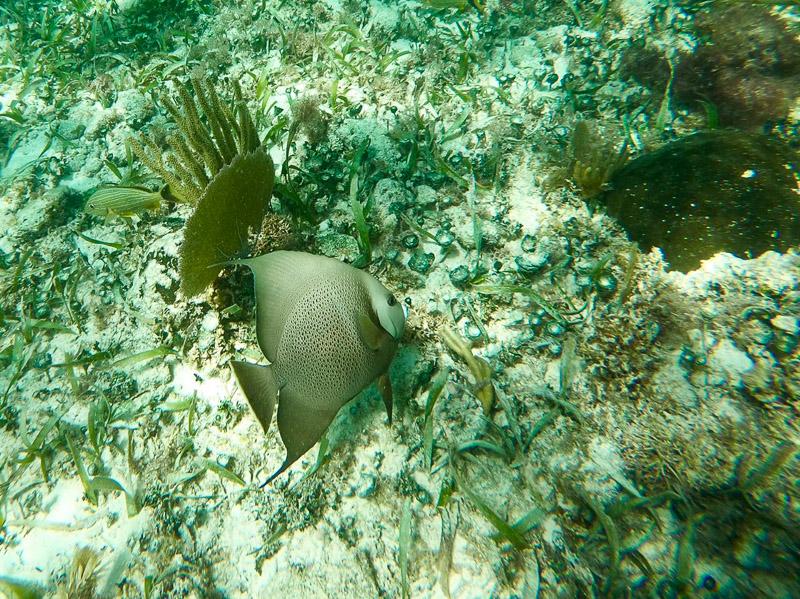 Réserve naturelle de Sian Kaan : barrière de corail, image non libre de droit.