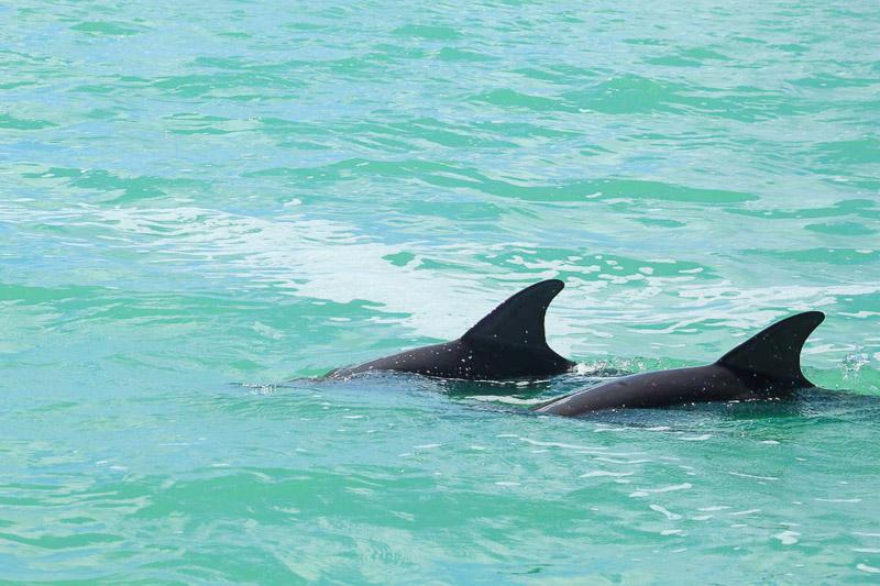 Réserve naturelle de Sian Kaan : dauphin, image non libre de droit.