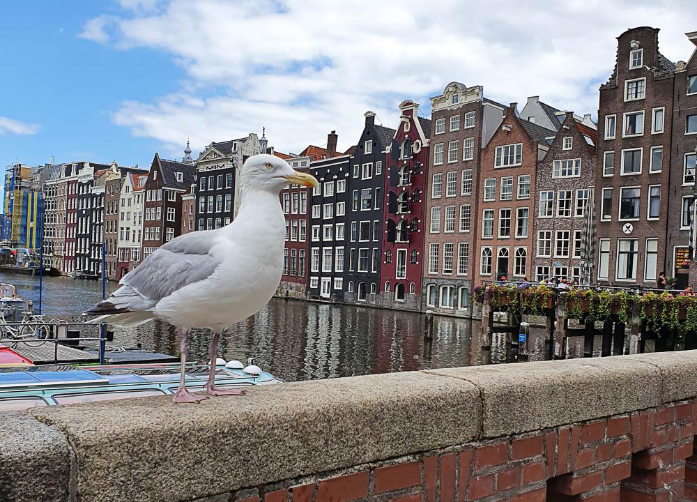 City trip à Amsterdam : nos incontournables
