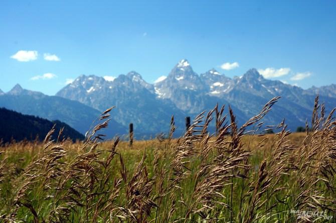 Au milieu des champs, les Tétons pointent vers le ciel.