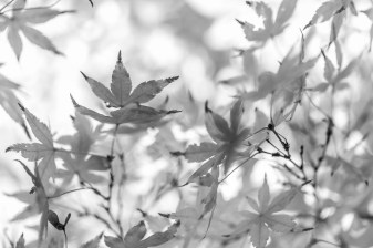 Leaves-Mabry-Campbell