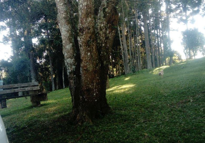 Camping Mariquita-Ponta Grossa-PR-9