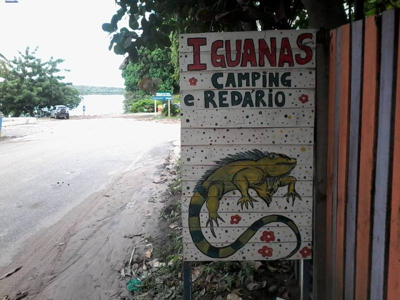 Camping Iguanas
