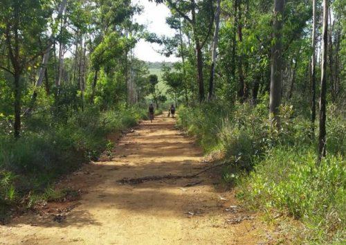 Camping Floresta Nacional de Brasília (Atenção)
