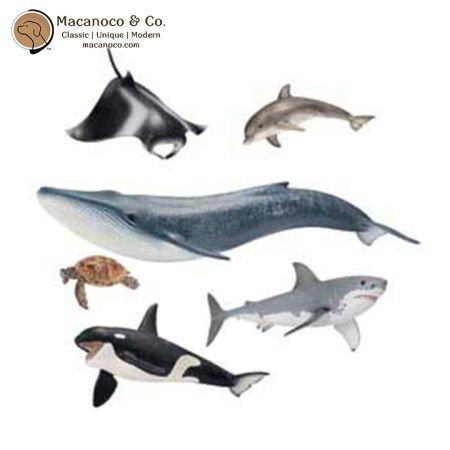 Marine Life Kingdom