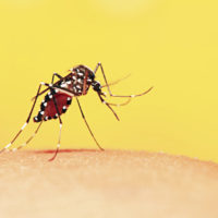 Zika Virus Blog - MacArthur Medical Center