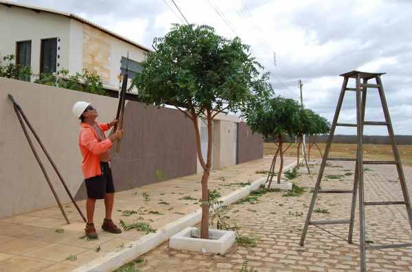 Corte e poda das árvores mais visibilidade nas vias públicas
