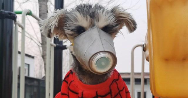 A dog wears a protective mask toward off coronavirus
