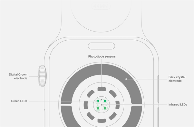 Diagram of the back of an Apple Watch Series 5