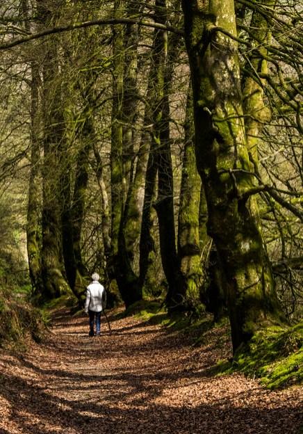 23. 2018_te awamutu_a019_open__a walk in the woods