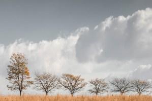 3_dm_autumncomes