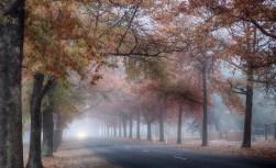 4_tt_autumn fog