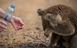 iconic australia_overwhelmed by the generosity of strangers
