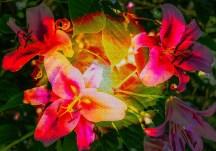 kelidascopeflower