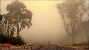 rider in the fog - commended