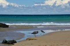5. Skenes Beach-20-20-2
