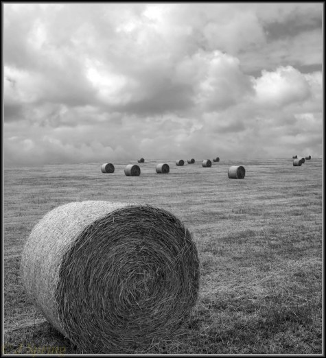 DSC08861abcd vert pano rolled hay bales and clouds Sml2 -74-1