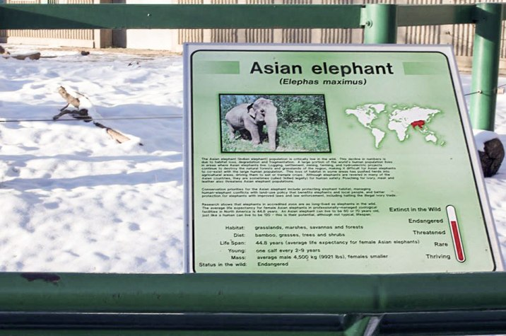 A sign outside Lucy's snowy pen, which highlights where Asian elephants typically are from.
