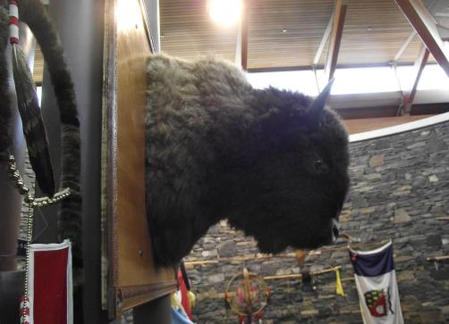 In Cree culture, the buffalo is believed to bring wisdom and healing.