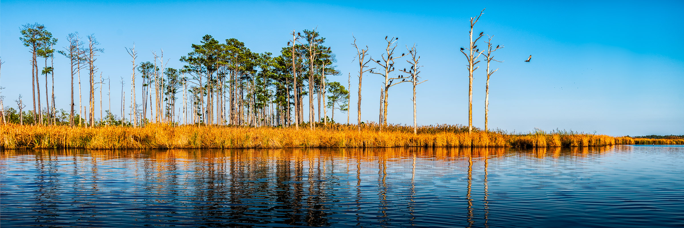 2016-10-16-Blackwater-pano-48-Bird-Trees-2400w.jpg