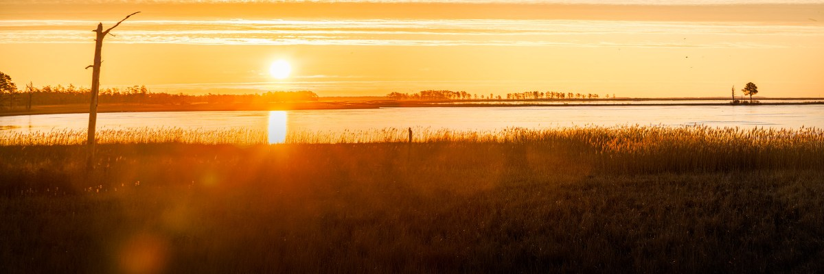 Pano, sunrise, Blackwater NWR