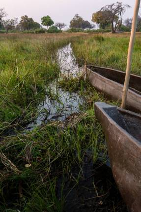 Botswana long canoes