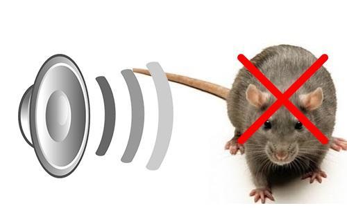 Mạch đuổi chuột, mạch đuổi gián, đuổi muỗi