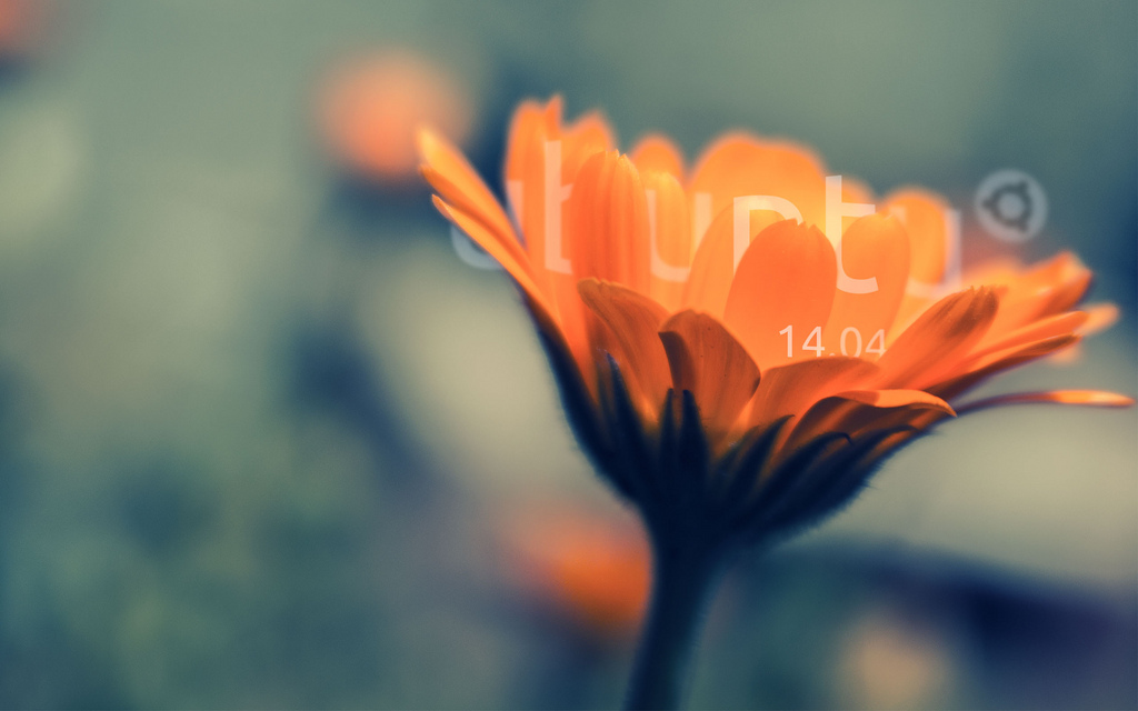Ubuntu OS - Photo cred - Nahue Fox