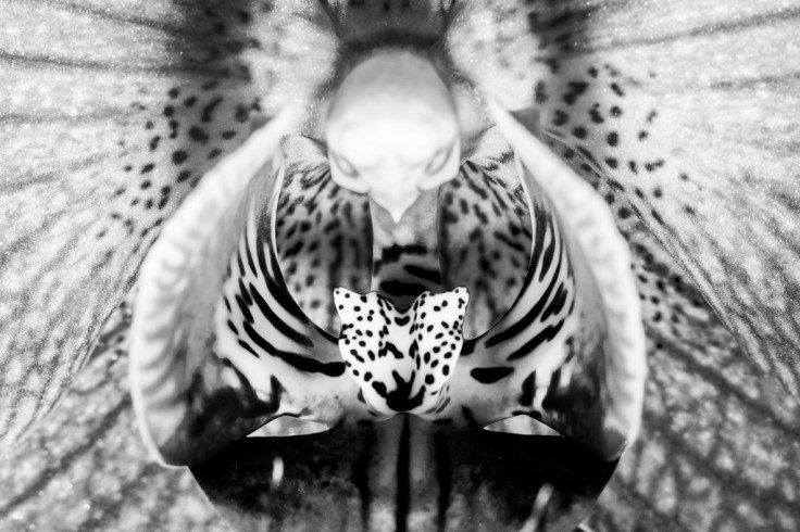 Flying leopard of death part II