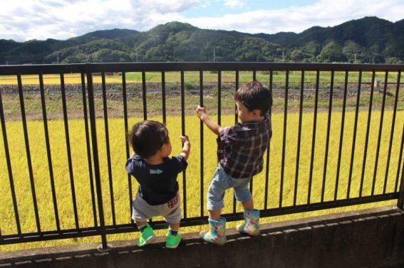 稲穂と子の成長が感じられる景色だなと思いました。(東舘 女性)