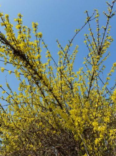 春っぽいけれど、桜はまだ先。(小田川・男性)