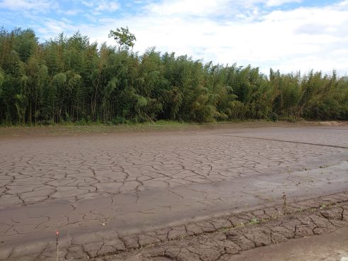 流れてきた土砂が乾き始めてひび割れている田んぼ(東舘・女性)