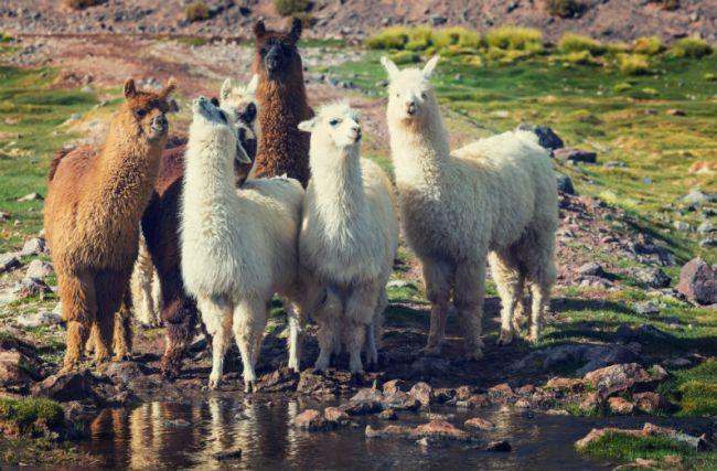 Vai viajar para o Peru? Conheça 10 curiosidades sobre o país