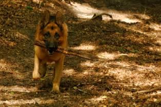 Zwierzaki_2010-08-09 11-46-33
