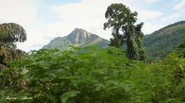 Srilanka-słonie-bawoły-safari-małpy-październik-2012-Fot-Maciej-Załuski-2