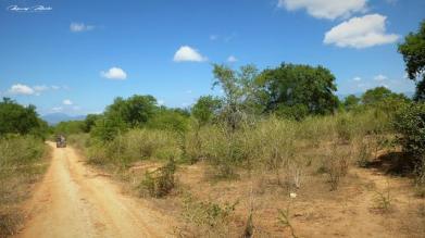 Srilanka-słonie-bawoły-safari-małpy-październik-2012-Fot-Maciej-Załuski-26