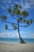 Zanzibar-Masajowie-Masajki-Ocean-Owoce-warzywa-plaża-ludzie-Małpka-Fot.Macie-16